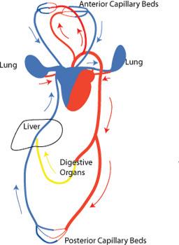 ventral viewstbiology