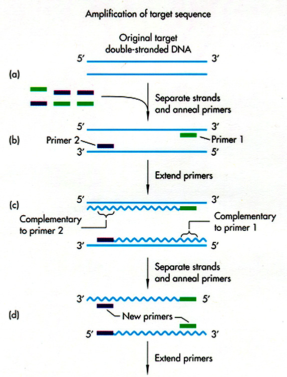 Chapter 8 A Recombinant Dna Technology