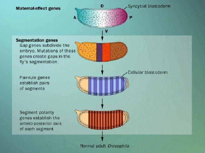 Gradient biology
